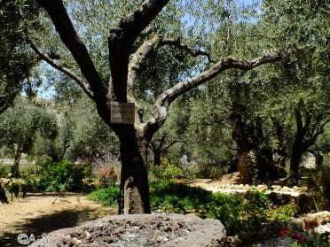 Jerusalén, Huerto de los Olivos